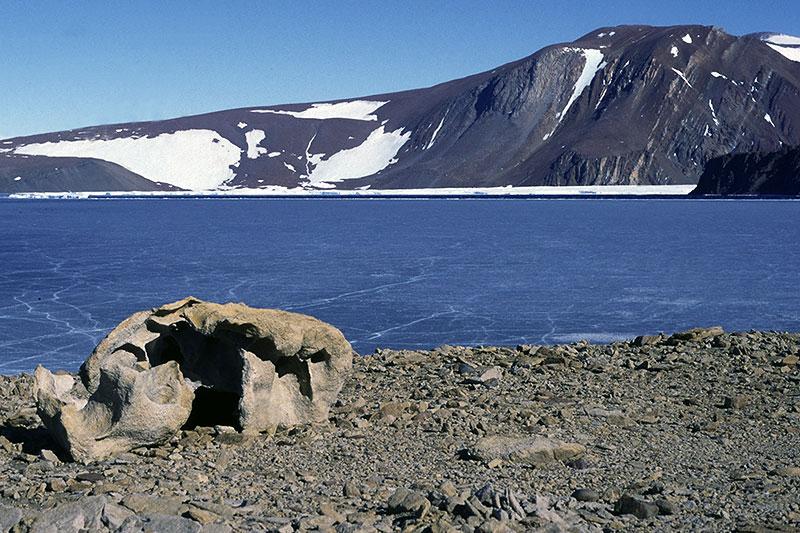 Swisseduc Glaciers Online Geology Of Antarctica